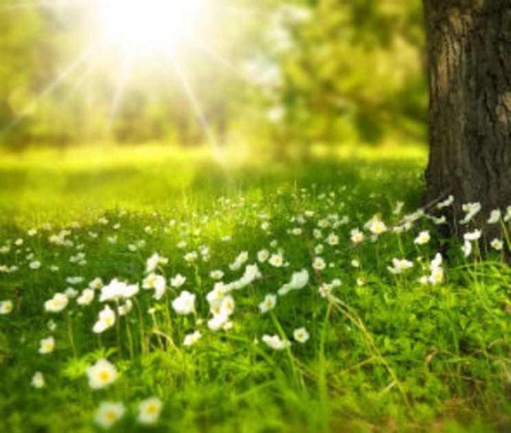 В первые выходные лета воронежцам обещают 31-градусную жару