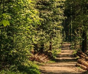 В августе в Воронеже начнут благоустраивать Северный лес