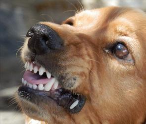 После нападения животных за медпомощью обратились более 2,2 тыс воронежцев