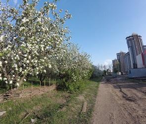 Активисты предлагают создать Народный парк на месте яблоневых садов в Воронеже