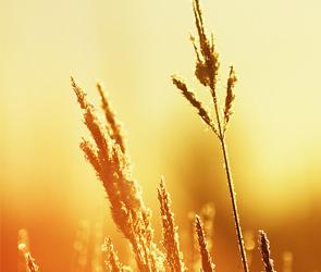 Синоптики: на рабочей неделе в Воронежской области ожидается 40-градусная жара