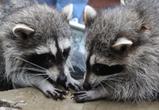 В Воронеже зоопарк начнет принимать посетителей 7 июля