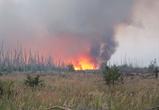 В Воронежской области за день выгорело больше 110 га леса