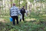 В воронежском заповеднике были задержаны «ягодные» нарушители