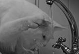 На этой неделе воронежцев вновь ожидает плановое отключение горячей воды