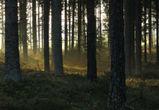 В Воронежском парке «Северный лес» вырубят около 5 000 деревьев