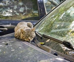 Разбитая машина – месть или неосторожность соседей: что делать, советует юрист