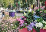 Стало известно, как пройдет X Международный фестиваль «Город-Сад»