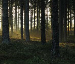 В Воронеже приступили к реализации проекта по сохранению лесов