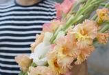 «Потому что гладиолус»: как устроена первая в Воронеже цветочная ферма