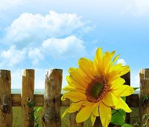 Жаркую и солнечную рабочую неделю обещают воронежцам синоптики
