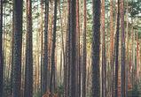 В Воронеже с подрядчиком расторгли контракт по вырубке деревьев в Северном лесу