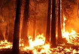 На территории Воронежской области объявлена чрезвычайная пожароопасность