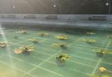 Озеро в центральном парке Воронежа украсили лилиями