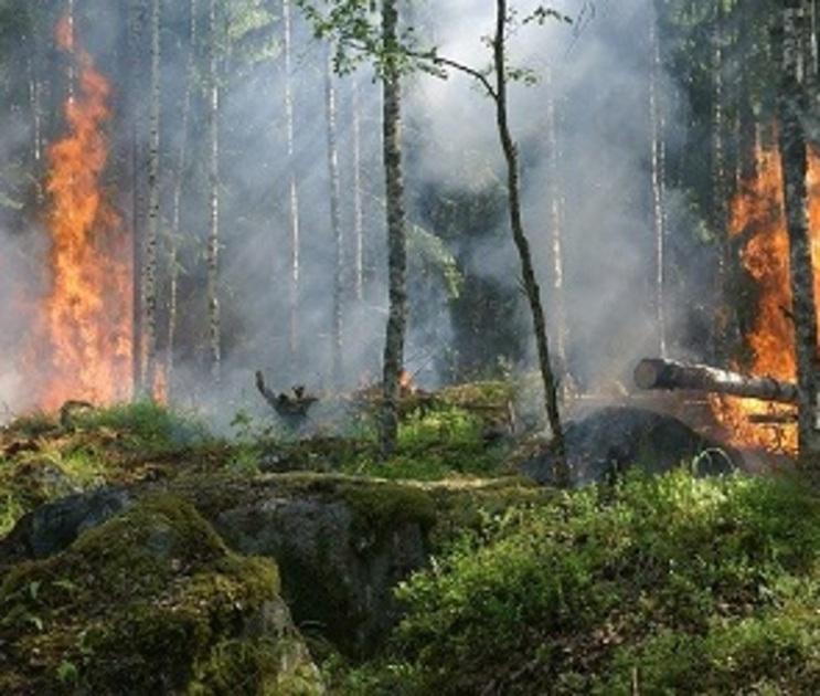 В Воронежской области сохраняется  запредельный уровень пожарной опасности