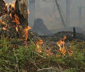 В яблоневом саду в Воронеже произошел пожар