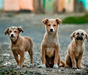 В Воронежской области 11 животных заболели бешенством