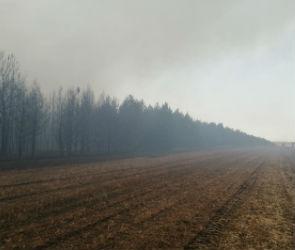 Крупный лесной пожар на 75 га в Воронежской области локализован