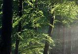 Воронежские ученые изучат зеленый пояс вокруг города