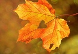 Синоптики рассказали о погоде в Воронеже в конце сентября – начале октября