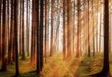 Собственникам «Северного леса» направили предложения по компенсационным участкам