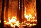 В Воронежской области ищут поджигателей леса в Подгорном