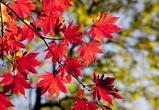 Теплая и сухая погода ожидается в первые выходные октября в Воронеже