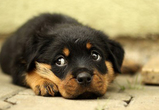 В Воронеже в следующем году может появиться несколько приютов для животных