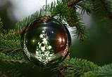 В осеннем Воронеже установили первую новогоднюю елку