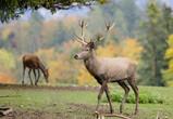Воронежских ребят приглашают на занятия по изучению диких животных