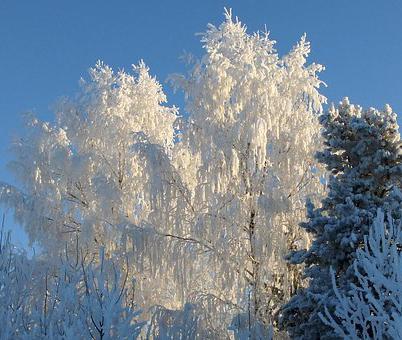 На предстоящей рабочей неделе воронежцам обещают морозы до 8 градусов