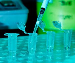 Воронежцам доступен предзаказ на ПЦР-тест на COVID-19 в «Гемотесте»
