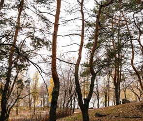 После обысков в Воронеже уволили замглавы управления лесного хозяйства