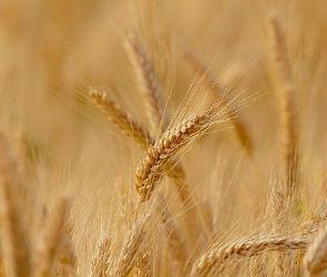 Воронежские аграрии получат 636 млн рублей субсидий из федерального бюджета