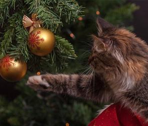 Воронежцам рассказали, как выбрать правильную новогоднюю елку