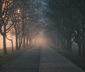Жителей Воронежской области предупредили о сильном тумане