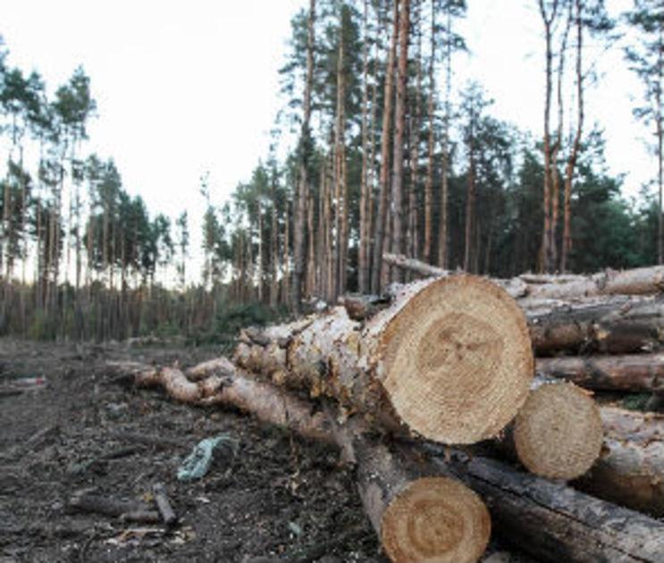 Воронежцы оказались против миллионных вложений в создание парка в Северном лесу