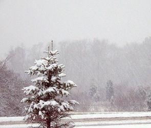 Синоптики: в выходные в Воронеже ожидается мокрый снег