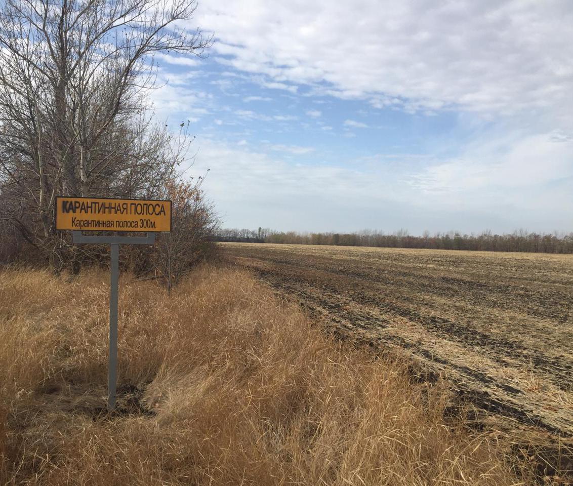 На границе с Украиной в Воронежской области появилась карантинная полоса