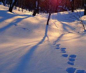Cиноптики: на рабочей неделе в Воронеже похолодает до -15 градусов