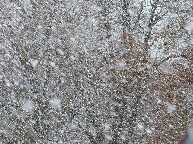 В Воронежской области ожидаются мокрый снег и сильный ветер