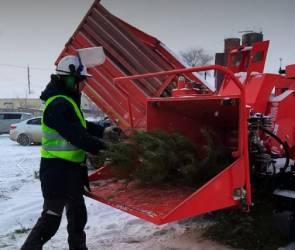 После праздников в Воронеже началась переработка новогодних елок