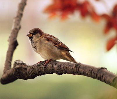 В Воронеже появится пункт реабилитации для диких птиц и рукокрылых