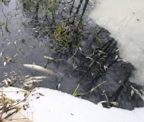 Гибнет все живое: в Воронежской и Липецкой областях – экологическая катастрофа