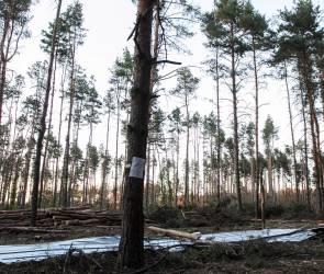 Воронежский губернатор поручил проконтролировать сохранность Северного леса