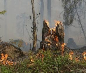 Сильные лесные пожары в Воронежское области ожидаются уже в апреле