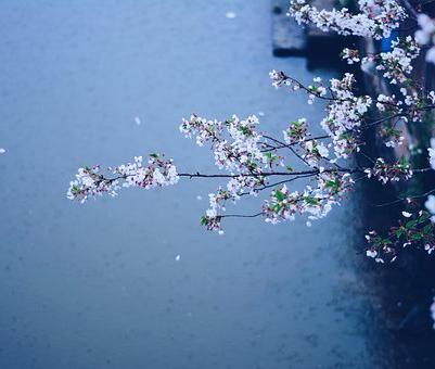 В первые дни весны в Воронеже прогнозируют теплые дожди