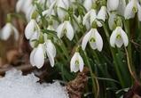 Главный синоптик региона рассказал о погоде в марте в Воронежской области