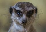 У обитателей воронежского зоопарка расширится жилплощадь