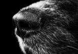 МВД заинтересовалось кровавыми собачьими боями под Воронежем